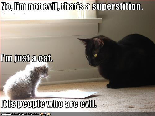 Superstitious cats